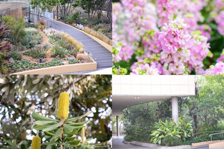 パ-クスガーデンと植物の写真
