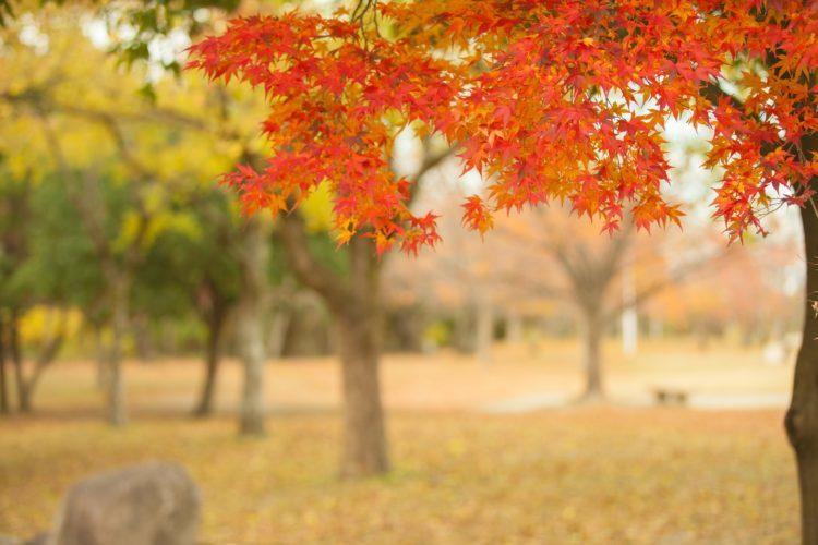 【년 오사카 단풍 명소 2018】인기