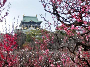 大阪城公園梅林 (3)