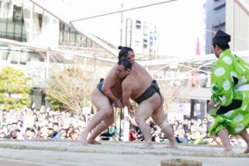 haru-sumo1