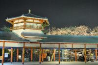 長野公園(奥河内さくら公園) 夜桜ライトアップ