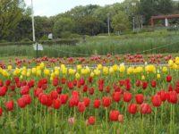 服部緑地 春の花