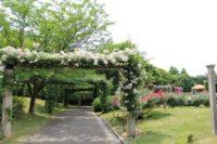 蜻蛉池公園 バラの見ごろ