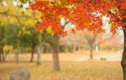 大阪の紅葉 2018!人気のおすすめ絶景スポット5選