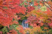 万博記念公園 紅葉まつり